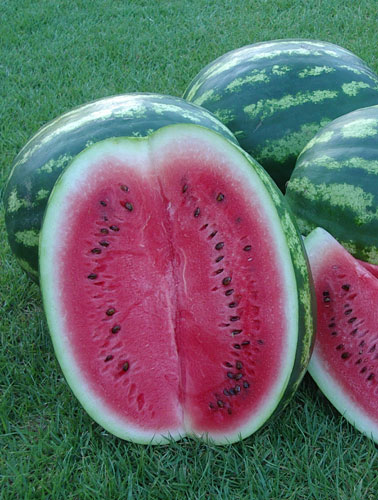 Watermelon, Crimson Sweet