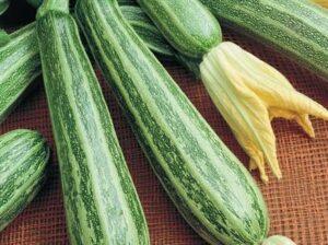Zucchini, Cocozelle