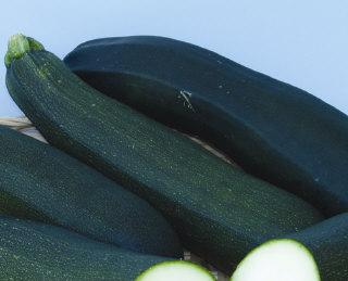 Zucchini, Dark Green