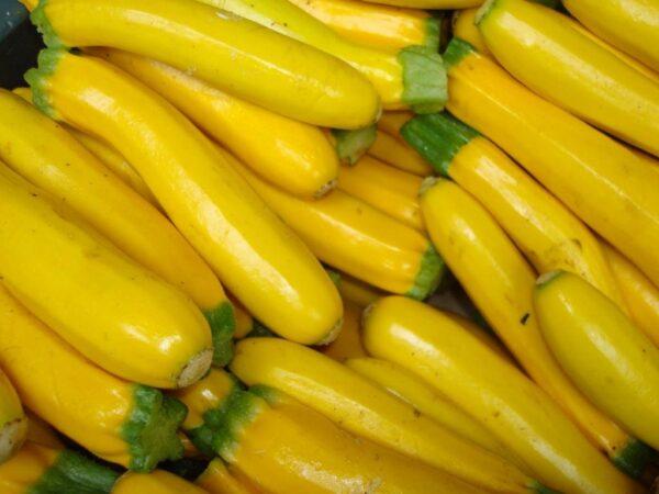 Zucchini, Golden