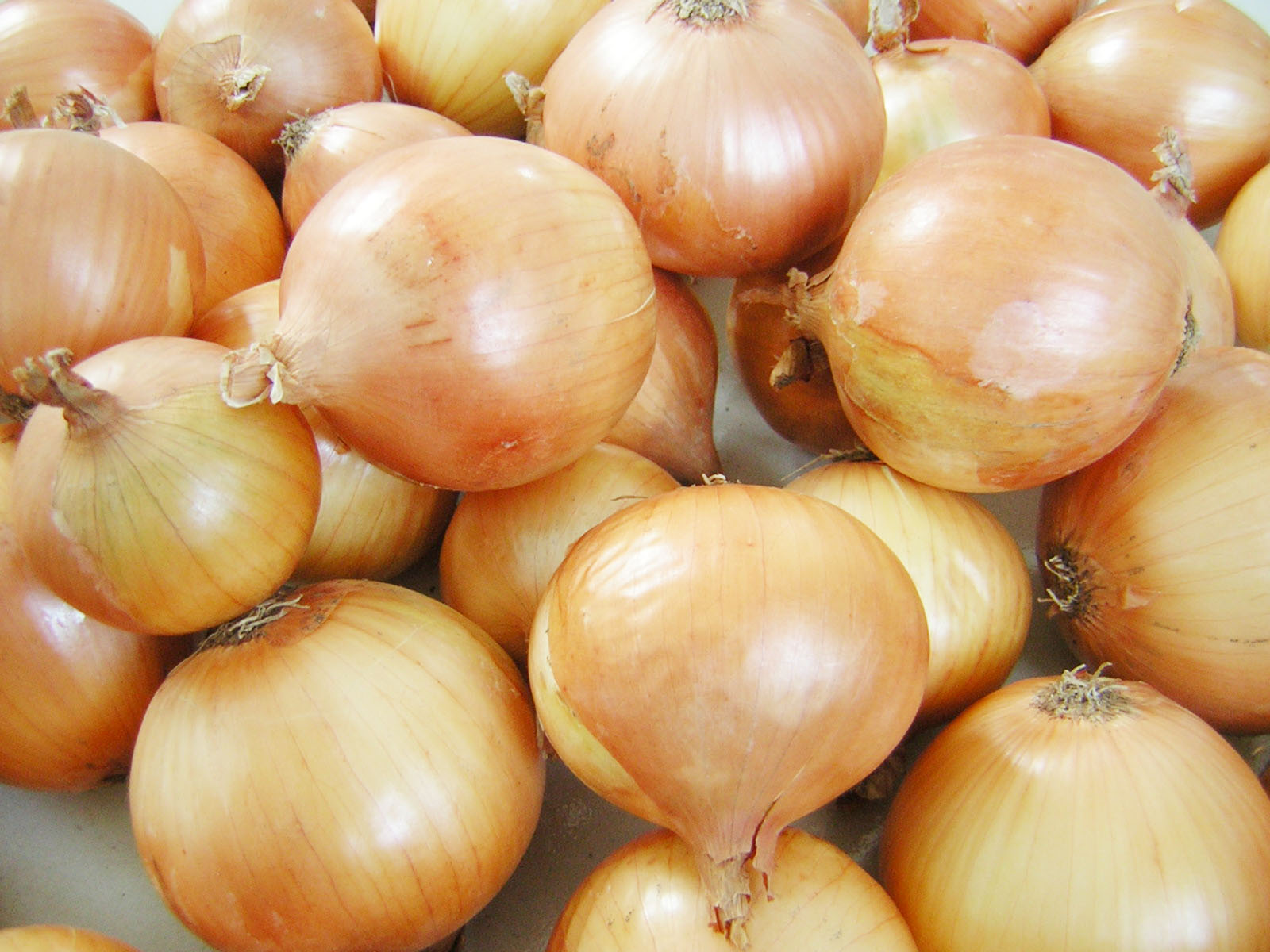 Onion Sets, Garlic & Shallot Bulbs