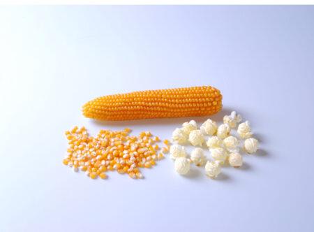 Popcorn, Mushroom