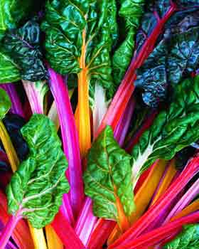 Swiss Chard, Rainbow