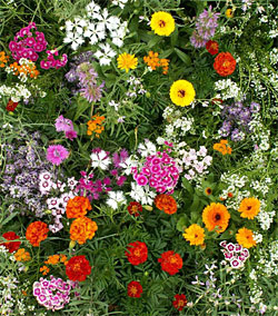 fragrant flower mixture
