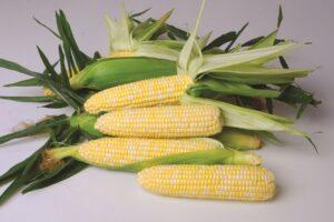 nirvana sweet corn
