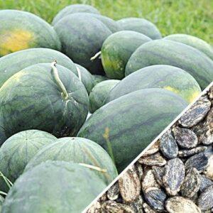 Watermelon Florida Giant seeds