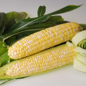Sweetness corn