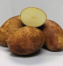 Gold Rush Potato