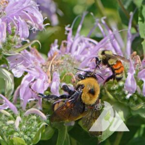 Bumblebee Buffet